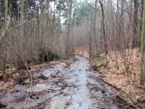 zerfahrener_Waldweg_Stadtwald_Pirna_klein