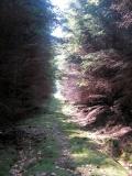 Waldweg_Oberer_Hippengrundweg_klein