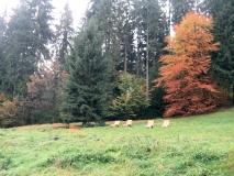 Liegen_hinter_Nationalparkhaus_Zeughaus_klein