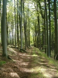 Waldweg_Hausberg_klein