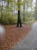 Baum_mit_zwei_Wurzeln