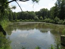 roamntischer_Teich_beim_Alt-Olischer-Teich_klein