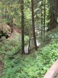 Staubecken_des_Lichtenhainer_Wasserfalls_klein