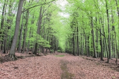breiter_Waldweg_Richtung_Winterberg_klein