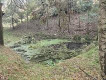 Teich_unterhalb_Luisenquelle_klein