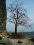 Baum_neben_Wartturm_klein