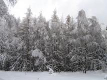 winterlicher_Wald_am_Fremdenweg_klein