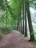 Buchenallee_noerdlich_von_Grosser_Baerenstein_klein
