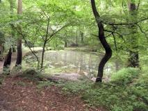 Teich_oberhalbe_von_Laube_klein