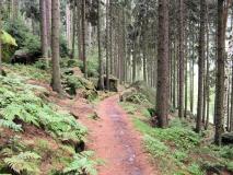 Waldweg_unterhalb_Belvedere_klein
