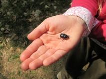 Waldmistkaefer_Kinderhand_klein