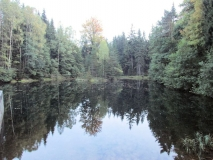 Spiegelung_am_Fuchsteich_klein