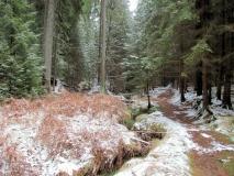 winterlicher_Duerrkamnitzbach_klein