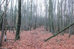Waldweg_oberhalb_Jortan_klein