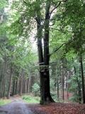 Hubertusbuche_klein