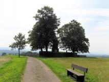 Napoleonlinde_auf_Hohburkersdorfer_Rundblick_klein