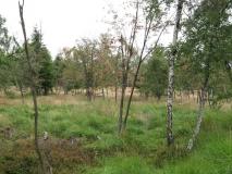 Vogelbaum_Birken_Schneeberg_klein