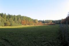 Wildwiese_oberhalb_Bielatal_klein