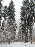 schneebedeckter_Neuweg_klein