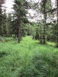 hoehes_Gras_am_Grenzweg_klein