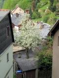 Baum_waechst_durch_Schuppendach_klein