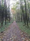 Promenadenweg_Neustadt-Goetzinger_Hoehe_klein