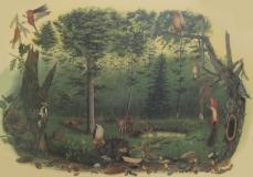 Spuren_im_Wald
