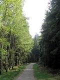 Blick_von_Affensteinpromenade_auf_Brosinnadel_klein