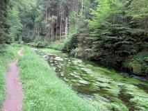 Pfad_und_Wassergras_Kirnitzsch_klein