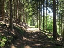 bequemer_Waldweg_zum_Karlshaus_klein
