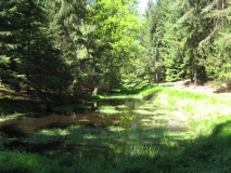 waldteich_oberhalb_Rainwiese_klein