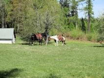 Pferde_an_der_Christianenburg_klein