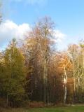 Winterlinde_LP_Sieben_Teiche_klein