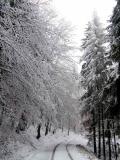 winterlicher_Neuer_Hohweg_Hinterhermsdorf_klein