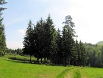 Wildwiese_mit_kahlen_Baeumen_klein
