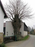 aelteste_Dorflinde_Mittelndorf_klein