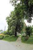 Friedensbaum_am_Ferienhof_klein