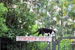 Katze_Ferienhof_Schaefer_klein