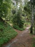 Weggabelung_Oberer_Affensteinweg_klein