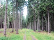Waldweg_oberhalb_Stimmersdorfer_Fusssteig_klein
