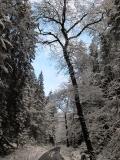 winterlicher_Grosser_Zschand_klein