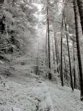 winterlicher_Reitsteig_an_den_Thorwalder_Waende_klein