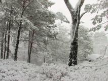winterlicher_Thorwalder_Waende_klein