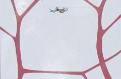 Spinnennetz_Schritt_1