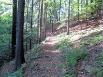 herbstlicher_Waldweg_Liebensgrund_klein